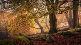 'Autumn in Padley Gorge' by Dave Fieldhouse